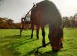 Débourrage Gaucho carriole 1 à pied